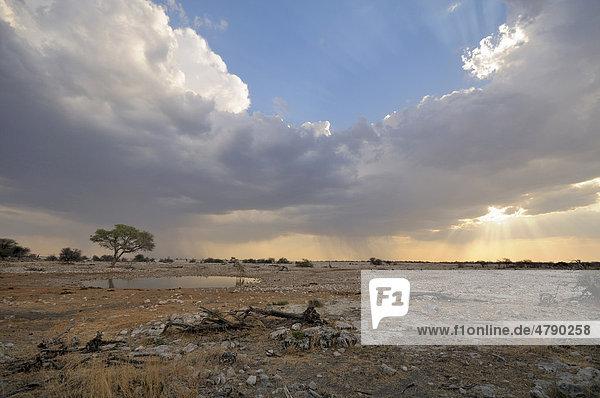 Gewitterstimmung am Wasserloch von Okaukuejo  Giraffen (Giraffa camelopardalis)  Etosha National Park  Afrika  Namibia
