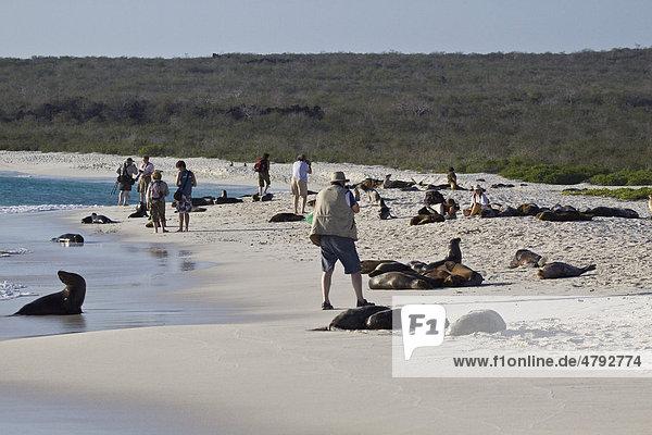 People with Galapagos Sealions (Zalophus wollebaeki)  Espanola Island  Galapagos Islands  Pacific Ocean