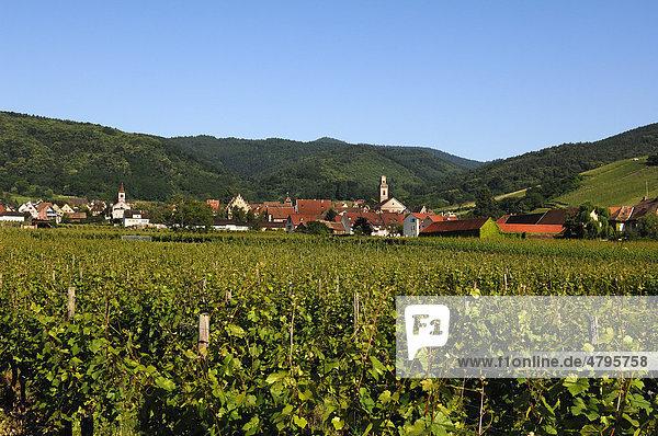 Blick auf den Weinort Riquewihr,  vorne Weinreben,  Elsass,  Frankreich,  Europa