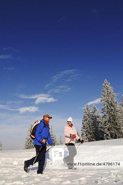 Wanderer  Wanderer  Winterwanderung auf dem ersten Premium-Winterwanderweg Deutschlands  Hemmersuppenalm  Reit im Winkl  Bayern  Deutschland  Europa