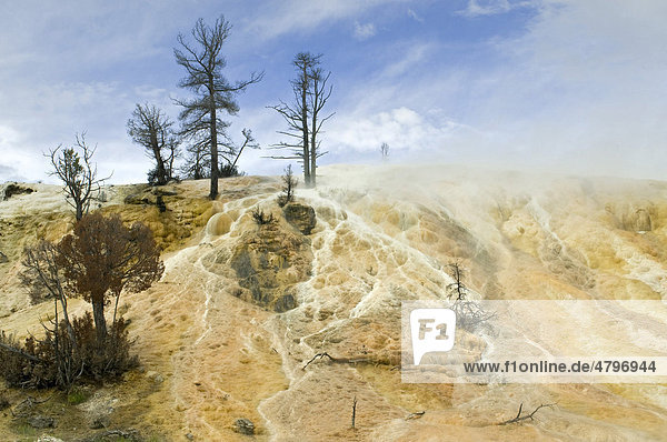 Kalkstein-Terrassen von Mammoth Hot Springs  Yellowstone Nationalpark  Wyoming  USA  Nordamerika