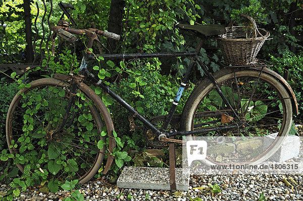 12 ambiance jardin diebolsheim elsass europa frankreich rue de l 39 abb wendling altes - Dekoration fahrrad ...