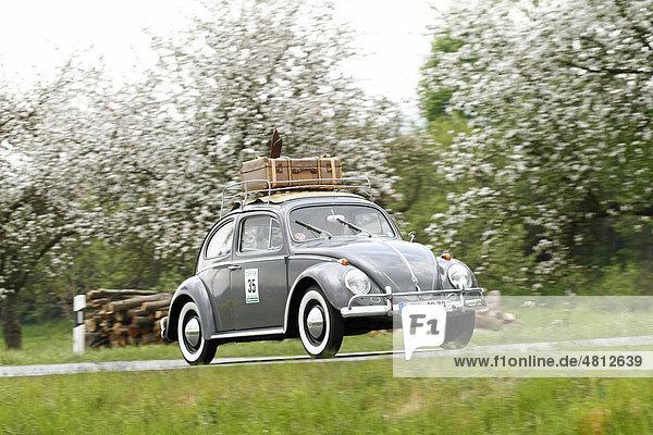 baujahr 1961 deutschland europa hessen oldtimer rallye wetzlar 2010 vw k fer mit ski und. Black Bedroom Furniture Sets. Home Design Ideas