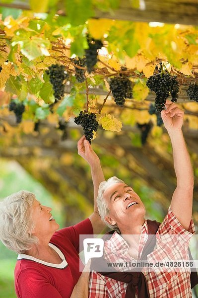 Italien  Südtirol  reifes Paar im Weinberg