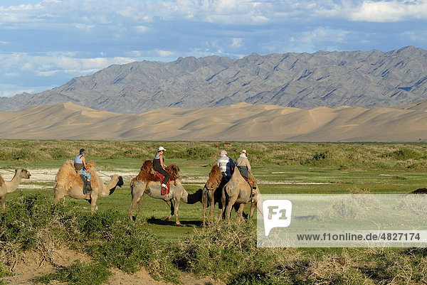 Tourists on camels stop to water the camels at a small fresh river which meanders through the lush green grass landscape in front of the large sand dunes Khorgoryn Els in the Gobi Desert  Gurvan Saikhan National Park  Oemnoegov Aimak  Mongolia  Asia