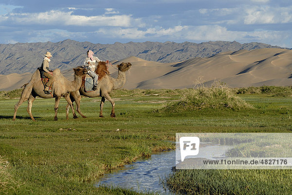 Tourists on camels with Mongolian camel guide stop to water the camels at a small fresh river which meanders through the lush green grass landscape in front of the large sand dunes Khorgoryn Els in the Gobi Desert  Gurvan Saikhan National Park  Oemnoegov Aimak  Mongolia  Asia