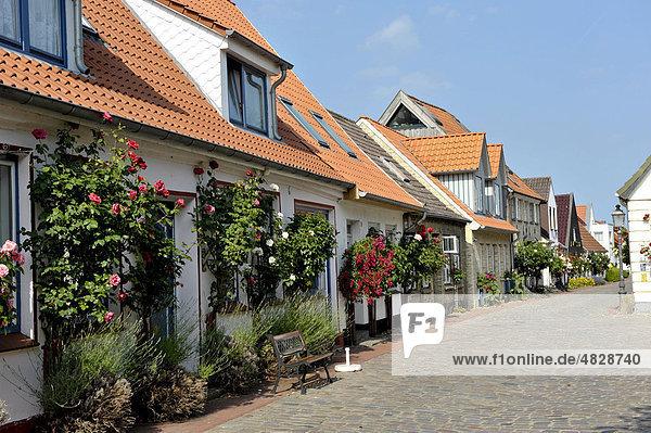 Alte Häuser in der Fischersiedlung Holm  Schleswig  Schleswig-Holstein  Norddeutschland  Deutschland  Europa