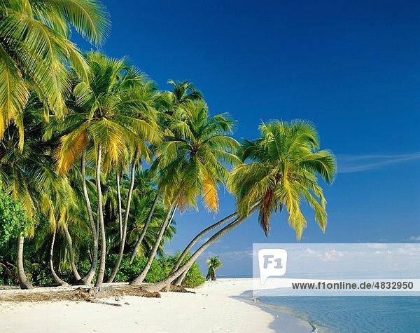Strand  Büsche  Küste  exotisch  Urlaub  Landmark  Palmen  Tourismus  Ruhe  Reisen  Bäume  tropischer Pflanzen  Serene  Himmel
