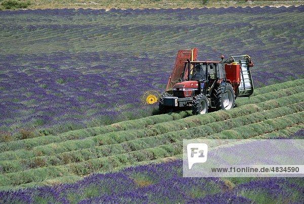 Ferrassieres  Frankreich  Europa  Ernte  Landmark  Lavendel  Provence  Tourismus  Reisen  Urlaub Ferrassieres, Frankreich, Europa, Ernte, Landmark, Lavendel, Provence, Tourismus, Reisen, Urlaub,
