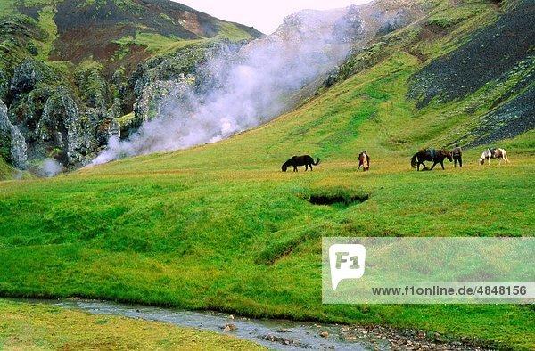 nahe  Zimmer  Heiße Quelle  grasen  Island