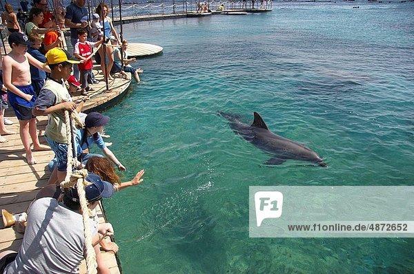 Delphin  Delphinus delphis  Dalbe  Elat  Riff