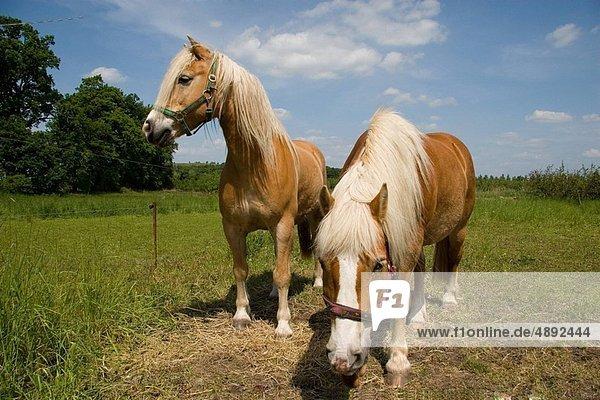 Double Horses