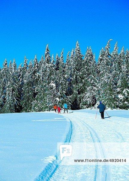 folgen  Skisport  Ski