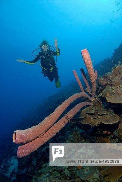 Karibisches Meer  Curacao