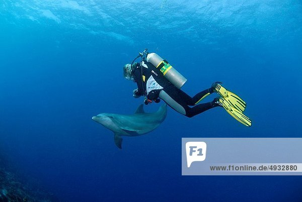 Dolphin and Diver  Tursiops truncatus  Caribbean Sea  Netherland Antilles  Curacao