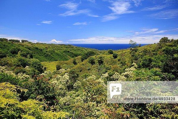 Vereinigte Staaten von Amerika  USA  Pazifischer Ozean  Pazifik  Stiller Ozean  Großer Ozean  Hawaii  Maui