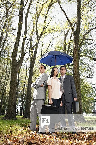 Regenschirm Schirm unterhalb Wald Wirtschaftsperson Business
