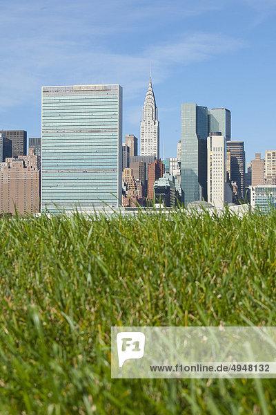 Gras in einem Feld mit Manhattan Skyline in den Hintergrund  New York City  New York State  USA