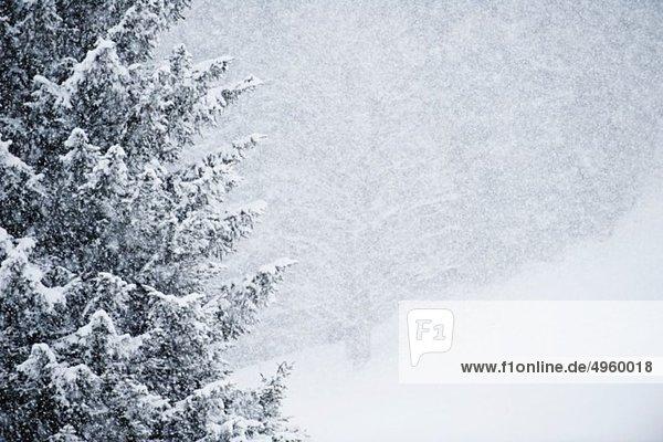 Österreich  Kleinwalsertal  Blick auf verschneite Bäume