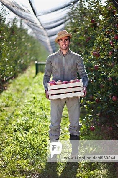 Kroatien  Baranja  Junger Mann mit Apfelkiste im Apfelgarten