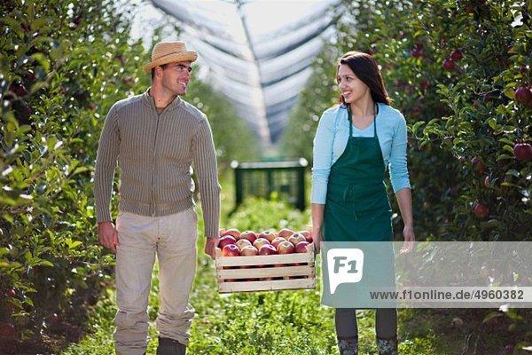Kroatien  Baranja  Junges Paar mit Krater voller Äpfel  lächelnd Kroatien, Baranja, Junges Paar mit Krater voller Äpfel, lächelnd