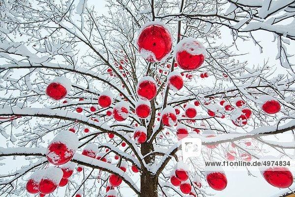 Christbaumkugeln in verschneitem Baum auf dem Salzburger Weihnachtsmarkt  Österreich