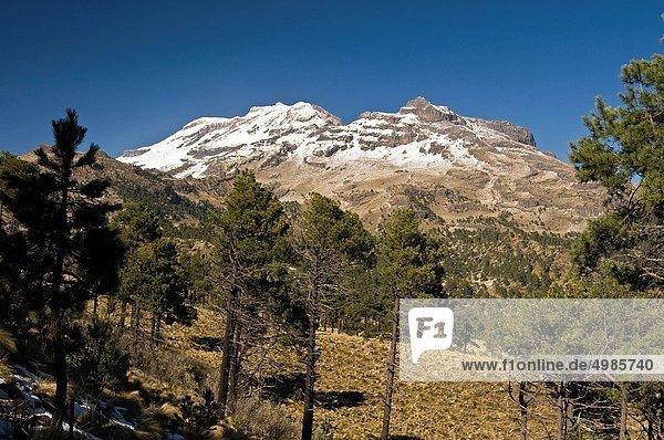 Vulkan  Kiefer  Pinus sylvestris  Kiefern  Föhren  Pinie  Fokus auf den Vordergrund  Fokus auf dem Vordergrund  Ansicht