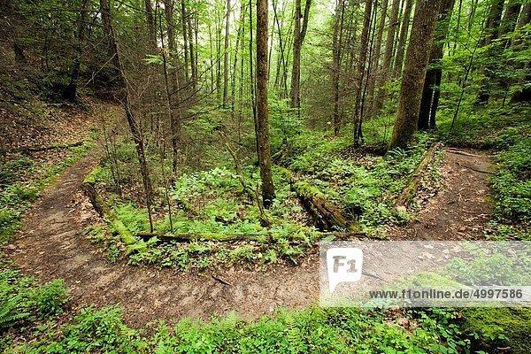 North Slope Trail - Pisgah National Forest  near Brevard  North Carolina  USA