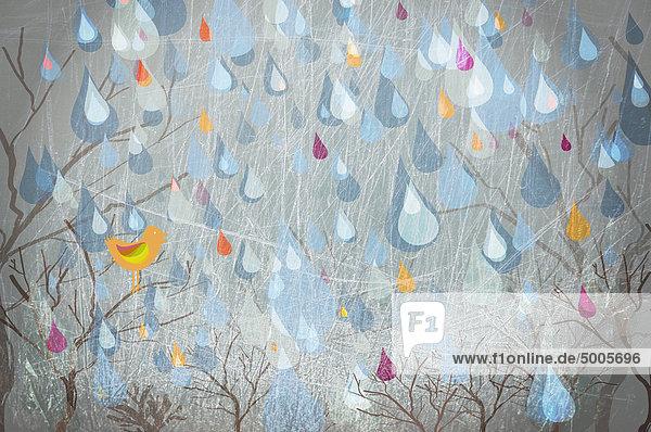 Regentropfen  die auf Bäume und einen Vogel fallen.