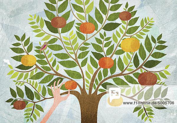 Eine Hand  die einen Apfel von einem Baum pflückt.