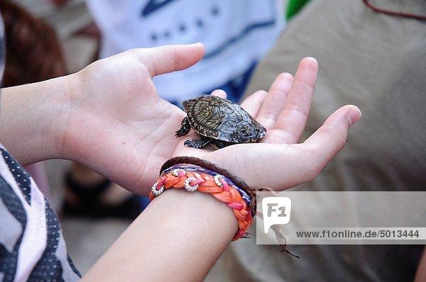 Volunteer frees turtle In Moros wetland València