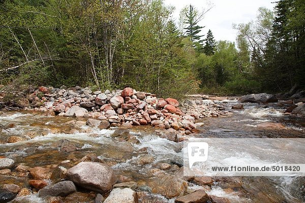 River bank erosion along the North Fork of the East Branch of the Pemigewasset River in the Pemigewasset Wilderness of Lincoln  New Hampshire USA