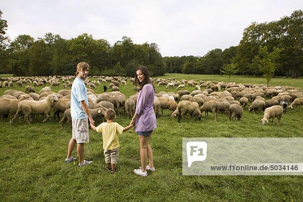 Familie und Schafherde auf einer Wiese  München  Bayern  Deutschland