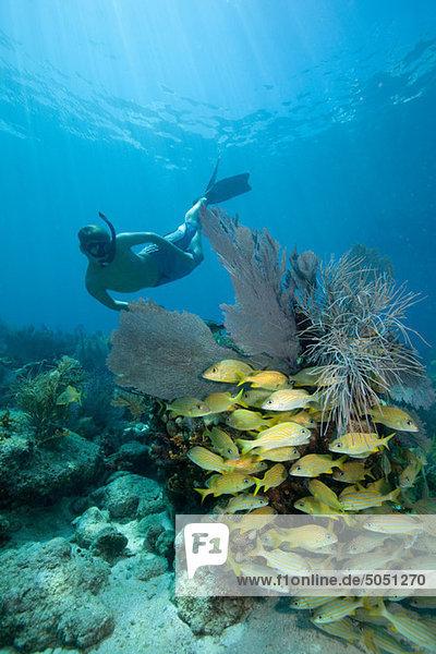 Schnorchler am Korallenriff