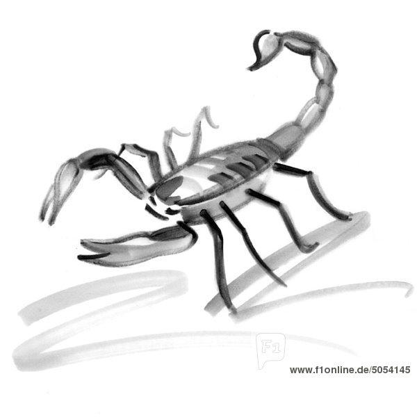 Skorpion Sternzeichen Illustration Gaa067000024 Photoalto