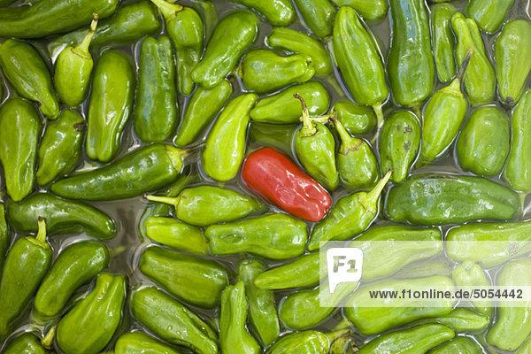 Einzelne rote Chilischote im Haufen grüner Chilischoten