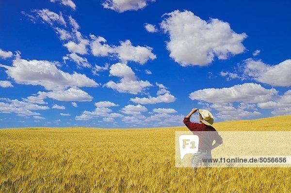 ein Mann Blick auf ein Reifen  Ernte bereit Hartweizen-Weizenfeld  in der Nähe von Glidden  Saskatchewan  Kanada ein Mann Blick auf ein Reifen, Ernte bereit Hartweizen-Weizenfeld, in der Nähe von Glidden, Saskatchewan, Kanada