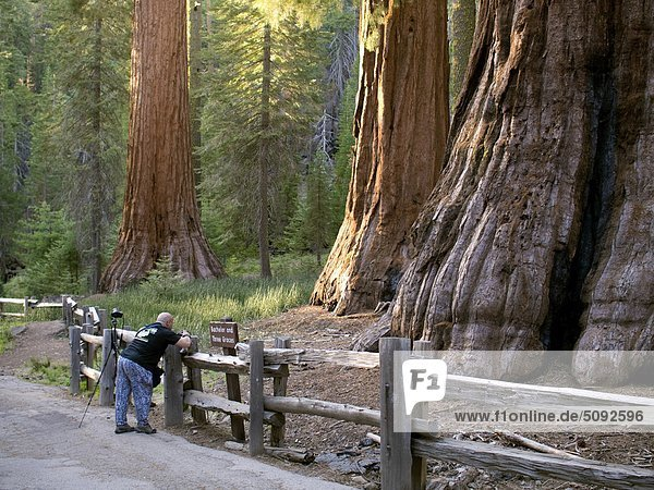 USA  California  Redwoods National Park