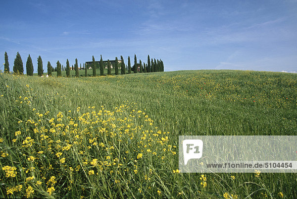 Landschaft Italien Pienza Toskana Val d'Orcia
