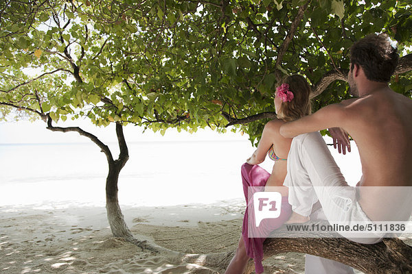 Couple sitting in tree at beach