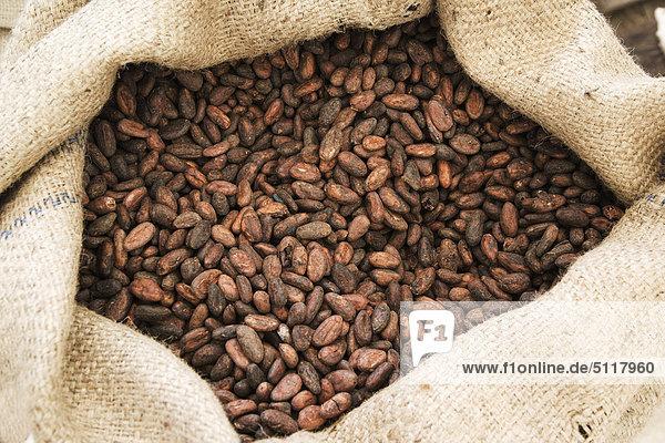 Kakaobohnen in den sack