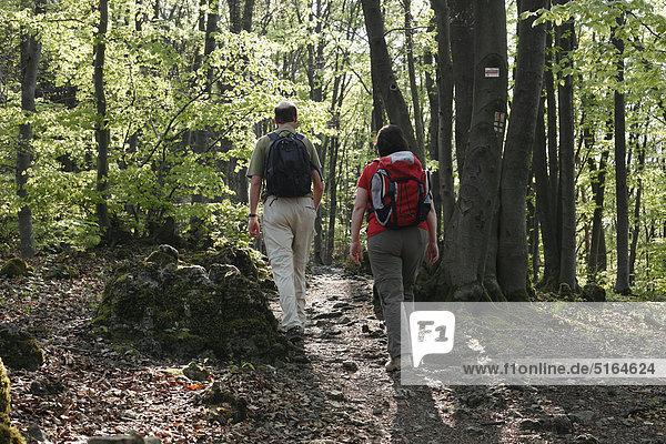 Upper n Schweiz  Blick auf Mann und Frau beim Wandern im Buchenwald