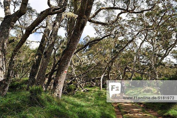 Weg  Wald  Wiedervereinigung  Insel  Highlands  Akazie  Wanderweg  Indischer Ozean  Indik