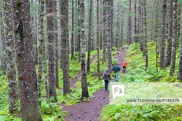 People walking in a rain forest type woods in Seward Alaska