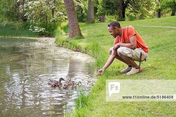 A young  african-american male feeding ducks