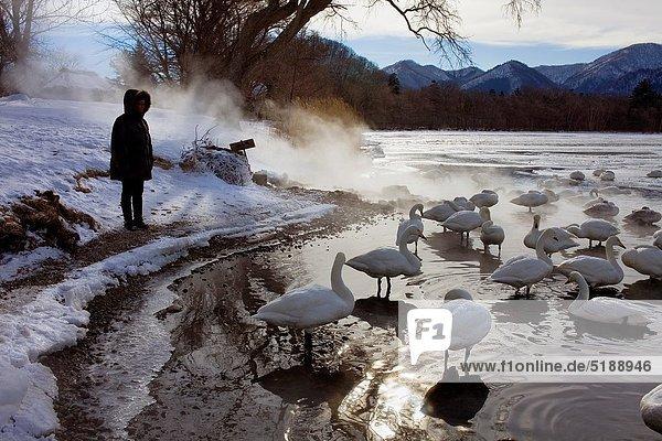Tourist  See  Schwan  Hokkaido  Japan  Kussharo