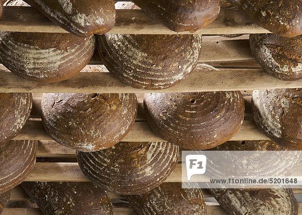 Bäckerei  frisch gebackene Brote in Regal