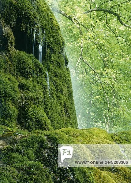 Gütersteiner Wasserfall  Bad Urach  Baden-Württemberg  Deutschland