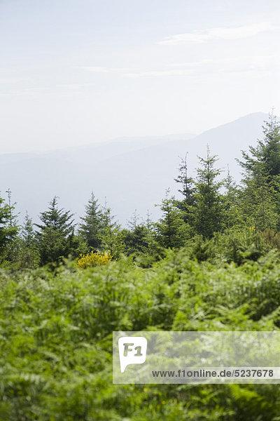Wald und Gebirge