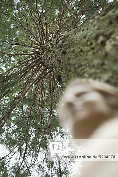 Baum  Untersicht